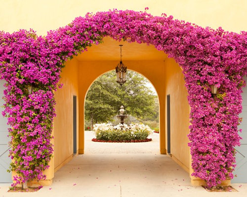 Bougainvillea on craftsman style bedroom
