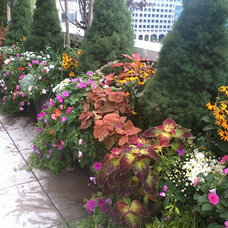 Traditional Landscape by New York Plantings Garden Design