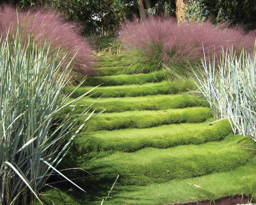 Pink muhly grass home design ideas pictures remodel and for Contemporary garden grasses