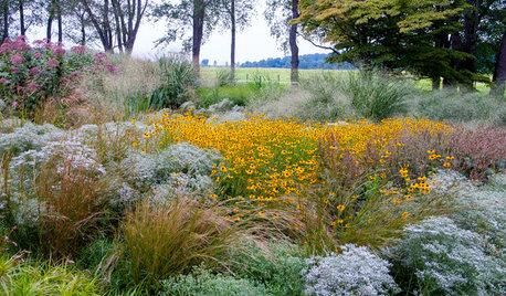 10 садовых цветов, за которыми можно почти не ухаживать