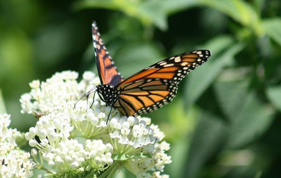Be a Butterfly Savior — Garden for the Monarchs