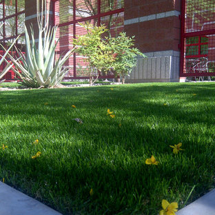 Photo of a traditional landscaping in Phoenix.