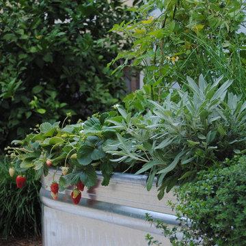 Temescal Family Garden -   Edible Garden