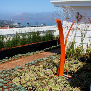 Inspiration for a modern landscaping in San Francisco.