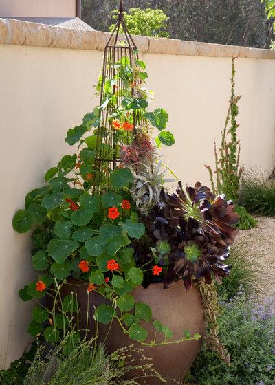 Mediterranean Garden by Margie Grace - Grace Design Associates