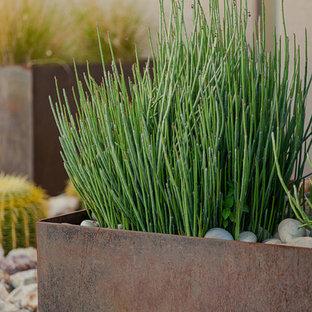 Inspiration for a mid-sized modern full sun front yard formal garden in Phoenix.