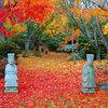 Paisajismo: Jardín en otoño, un estallido de colores