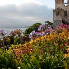 landscape The Gardens of Alcatraz/photo by Elizabeth Byers