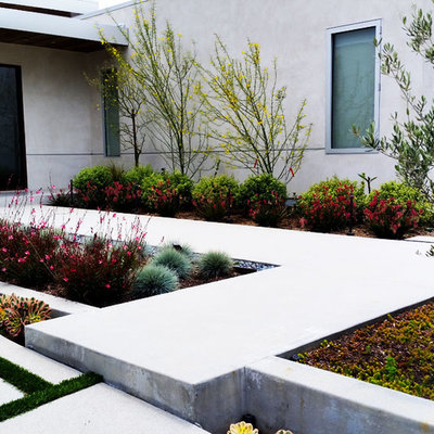 Photo of a mid-sized modern full sun front yard concrete paver landscaping in Los Angeles for summer.