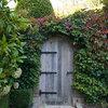 Rampicanti Resistenti al Freddo per Giardini e Terrazzi