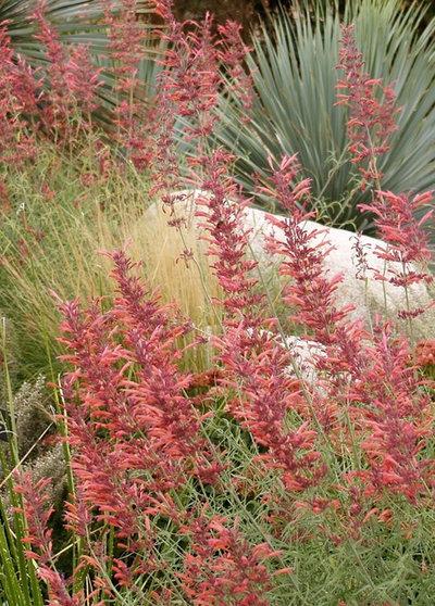 Landscape by Plant Select®