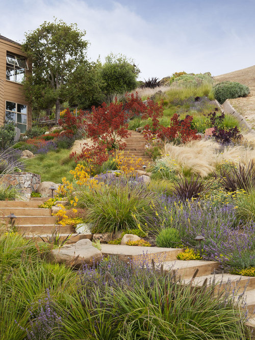 Bay area drought tolerant plants home design ideas for Beach house landscaping plants