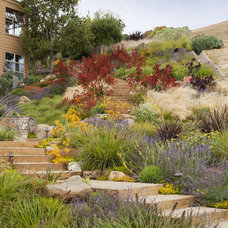 Beach Style Landscape by Arterra Landscape Architects