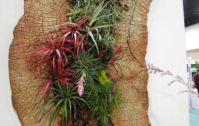Air Plants Go Easy on Indoor Gardeners