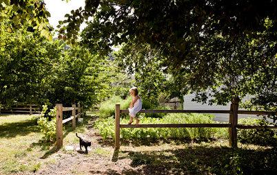 Кошкин сад: Как превратить свой участок в любимое место питомца