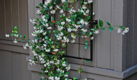 How to Choose a Climbing Plant for Your Front Door