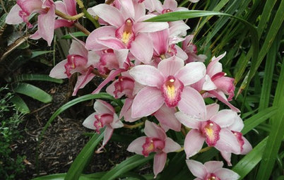 Orchids 101: Cymbidiums Add Beauty Indoors and Out