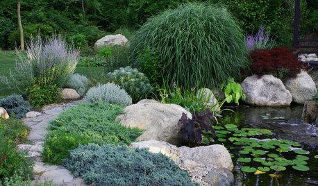 Great Design Plant: Juniperus Squamata 'Blue Star'
