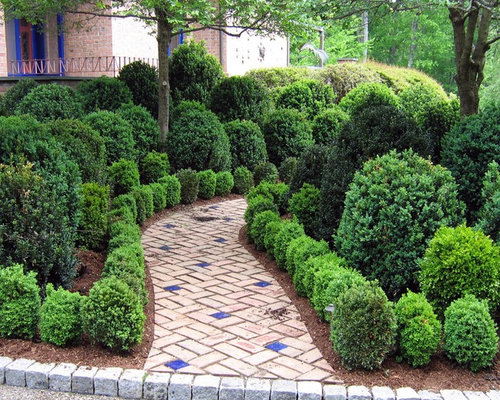 Boxwood Garden Home Design Ideas Pictures Remodel and Decor