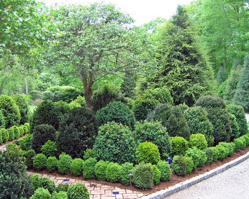 Boxwood Shrub Pictures Houzz