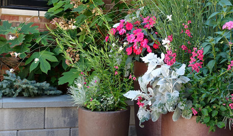 A Guide to Container Gardening For Beginners