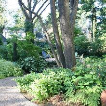 Shade Understory Gardens