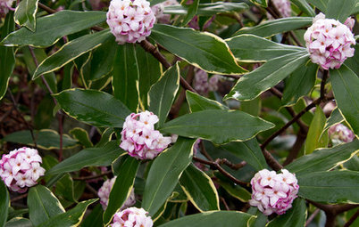 Bring On the Blossoms: 9 Top Picks for Flowering Shrubs