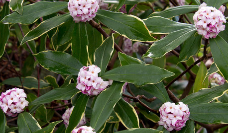 What's the Perfect Evergreen Shrub for Your Garden?