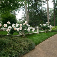 Traditional Landscape by Planters