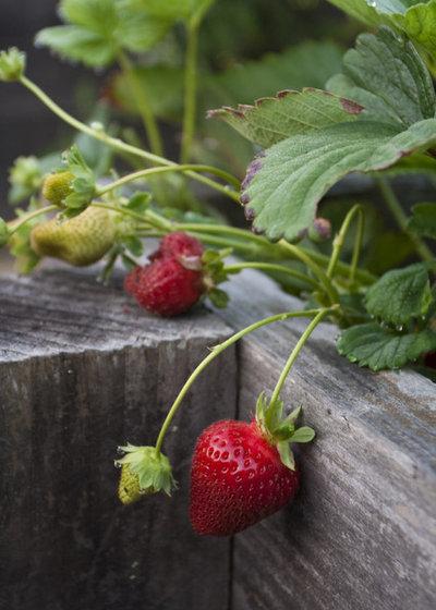 10 vari t s de fruits et l gumes faciles faire pousser en pots. Black Bedroom Furniture Sets. Home Design Ideas