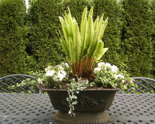 Fern planter home design ideas pictures remodel and decor for Decor 720 container
