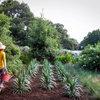 Blumen gießen: Die häufigsten Fehler im Sommer