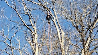 Tree Removal Higganum CT