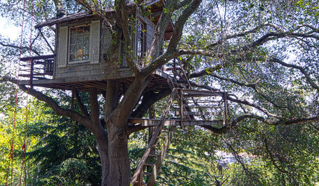 My Houzz: A Beautifully Tranquil Tiny Sleep Space in a Tree