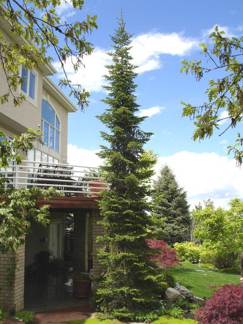 Tall Skinny Pine Trees
