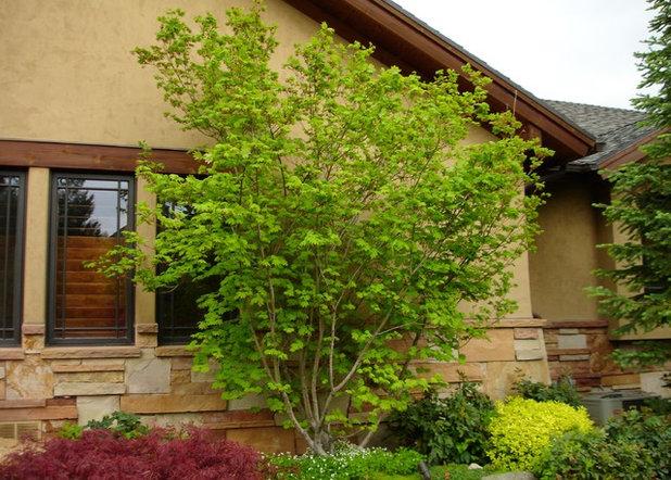 Great Design Plant: Vine Maple