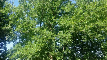 Trees We Love for North Texas