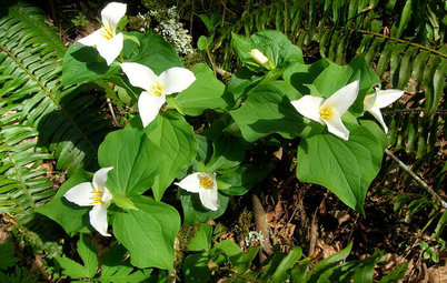 8 Native Flowers to Brighten Shady Garden Spots