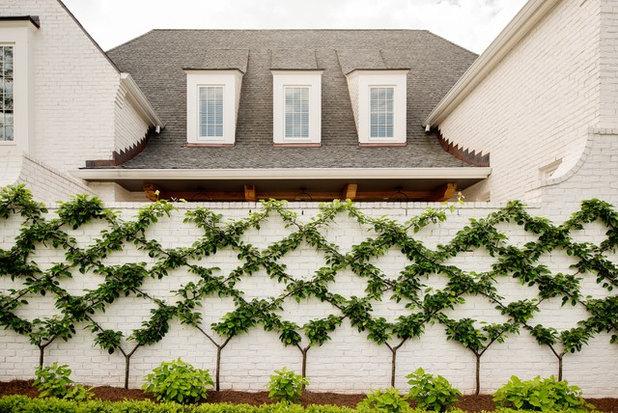 Transitional Garden by Allard Ward Architects