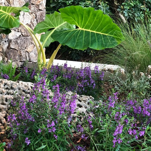 Photo of a small tropical full sun front yard concrete paver garden path in Miami for winter.