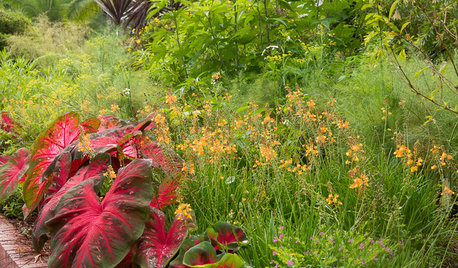 Great Garden Combo: Tropical Beauties for a Sun-Drenched Border