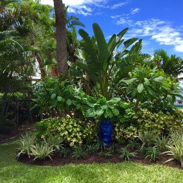 Tropical front & backyard landscapes....Palms & Color