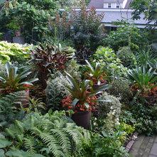 Tropical Landscape Tropical Landscape