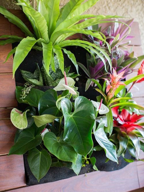 Indoor vertical garden houzz inspiration for a tropical landscaping in san diego workwithnaturefo