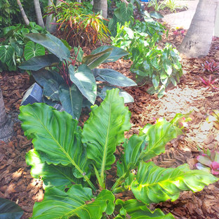 Photo of a tropical landscaping in Miami.