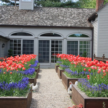 Tulips in planting beds