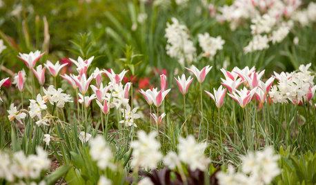 Hög tid att plantera vårens budbärare, lökarna
