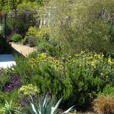Mediterranean Landscape by Gilson Group Landscape Design