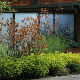 Privacy Trees And Shrubs Modern Landscaping Ideas Houzz