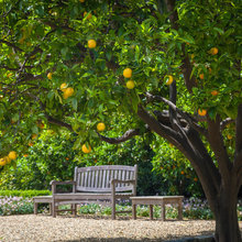 Spring Citrus Care Reaps Months of Sweet Rewards